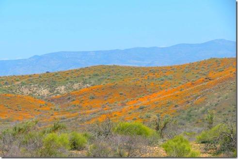 Flowered hillside