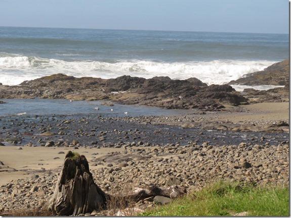 Beach View stump