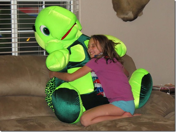 Hailey turtle