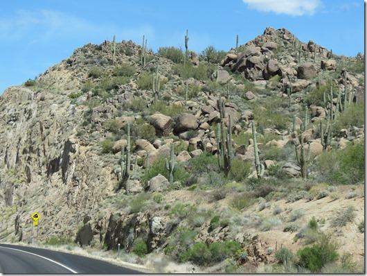 Cactus curve2