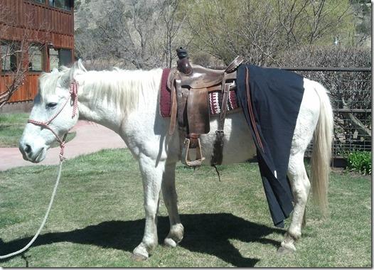 Shar horse