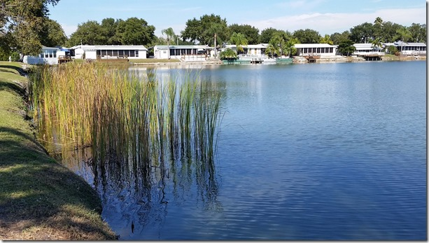 Lakeview reeds