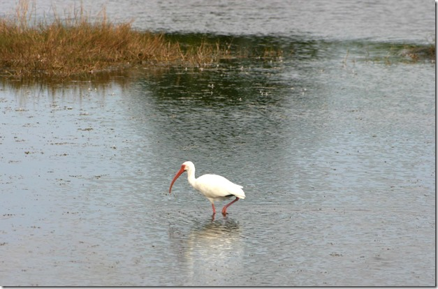 Stalking bird 2