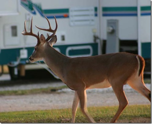 Big buck at RV small