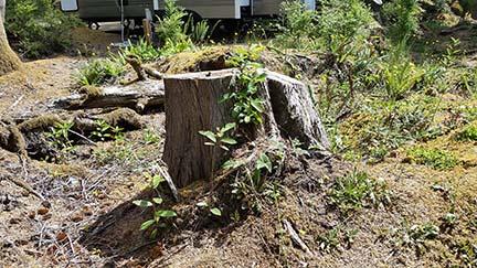 Stump 3 small
