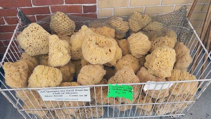 Sponges 2