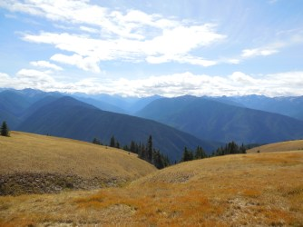 Hurricane Ridge, Olympic Peninsula, WA