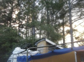 Camper Top in the Pines Timbers of Florida