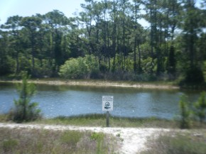 Gator Lake at St George Island SP