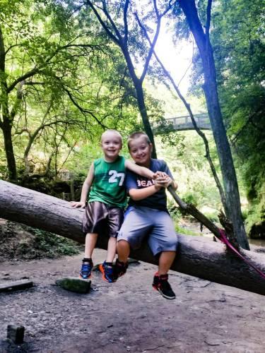 Matthiessen State Park Fallen Tree Near Bridge