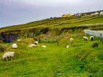Exploring Irishcountryside scenes.