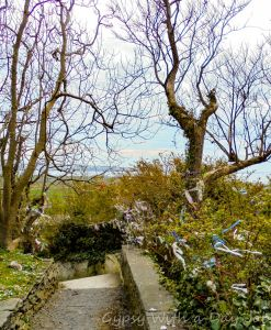 Cloughtie trees at St. Brigihd's holy well, liscannor, one of our Ireland highlights on our Ireland route.