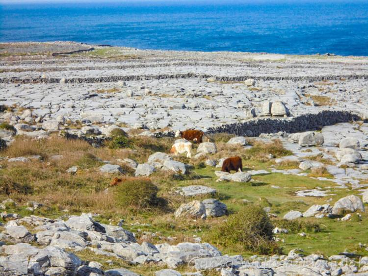 The Burren, our Ireland highlights on the Ireland route, the ireland itinerary.