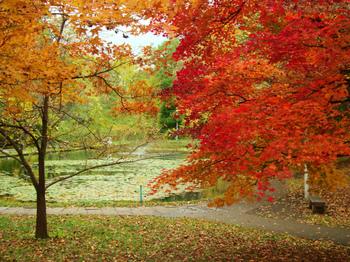 紅葉の大野池