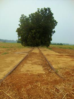 シュガートレイン線路跡