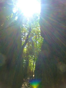 南大東島バリバリ岩