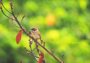 lil bird 8 wm