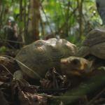 fauna_silvestre_tortugas