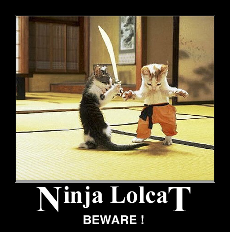 Ninja Lolcat