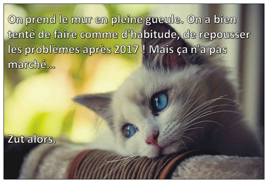 armee chat triste