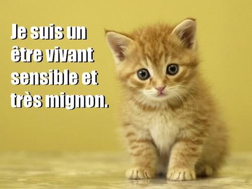 animal sensible 1