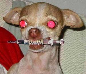chien junkie