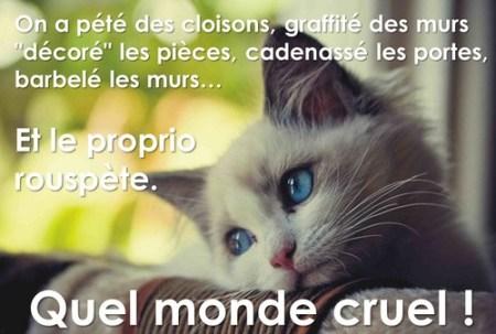 monde cruel
