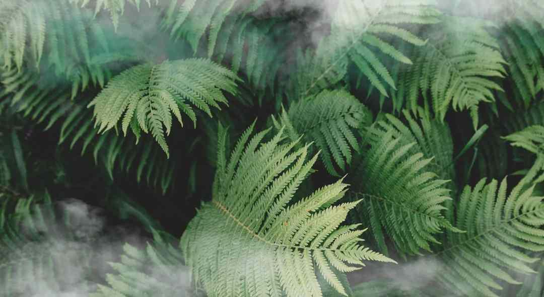 Nobua H2flo Luxx : une nouvelle collection inspirée de la nature