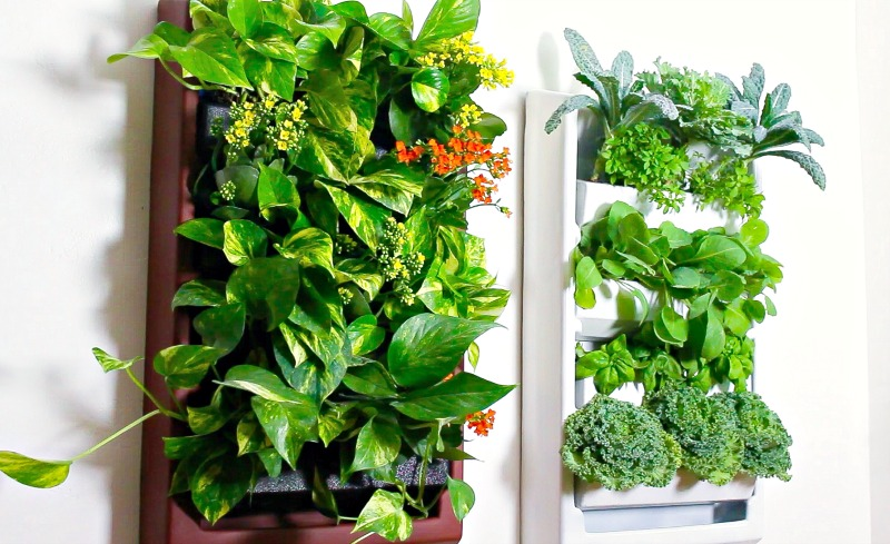 Plantaire-kitchen-garden-on-wall-H2OBungalow