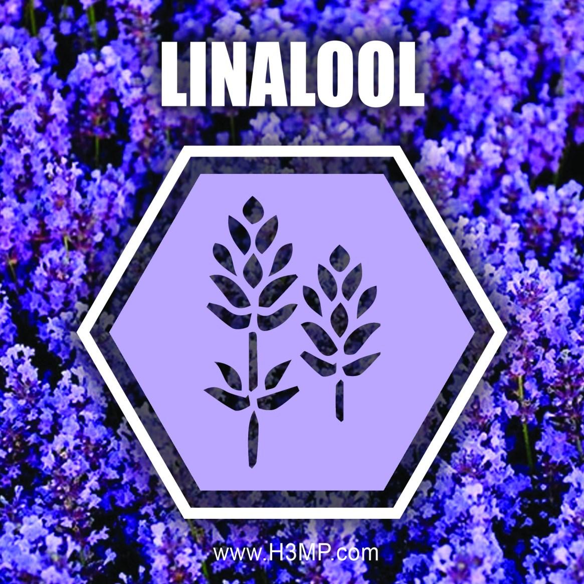 H3MP LINALOOL