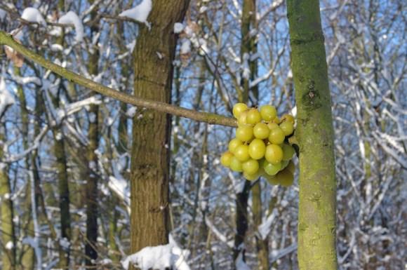 Bosjes van Poot11