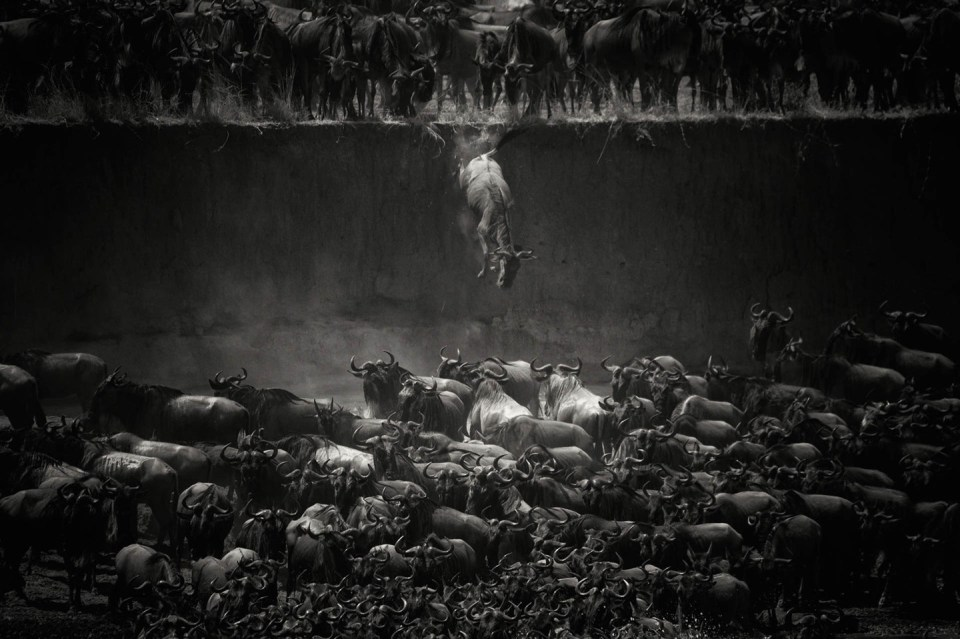 """The great migration"" by Nicole Cambre"