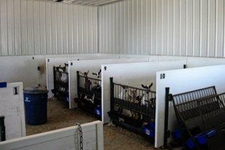 Interior Goat Farm