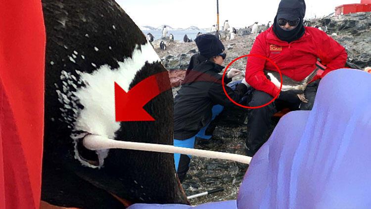 Türk profesör Antarktika seferinde keşfetti! 'Dünyada henüz tanımlanmamış'