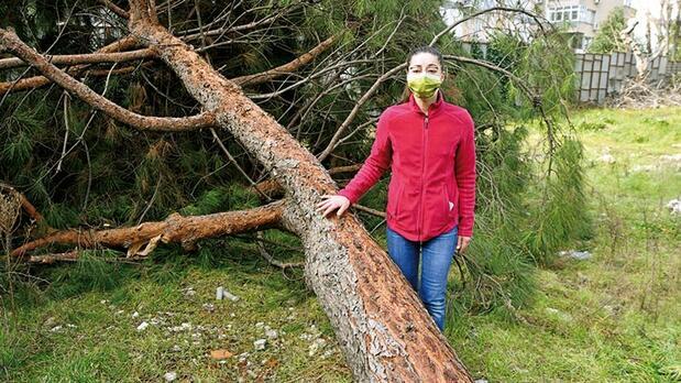 100 yıllık ağacı kesip kaçtılar