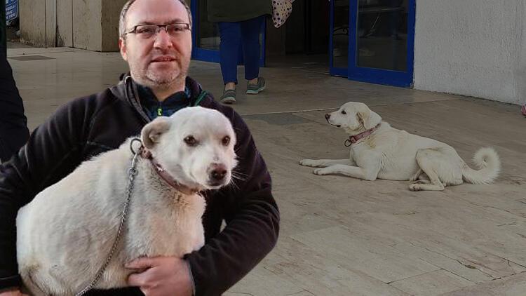 'Pamuk' 14 gün boyunca hastane kapısından ayrılmadı, sahibini bekledi
