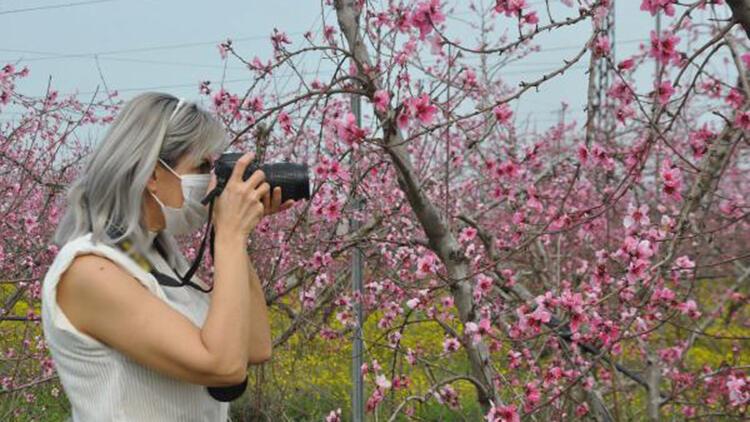 Amik Ovası'nda meyve bahçeleri rengarenk oldu