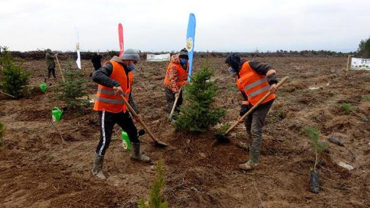 Edirne'de yanan ormanlar ağaçlandırılıyor