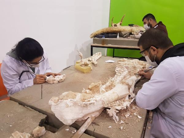 Kayseri'de bine yakın fosil bulundu! '8 milyon yıl önce günümüz Afrikası'na benzer'