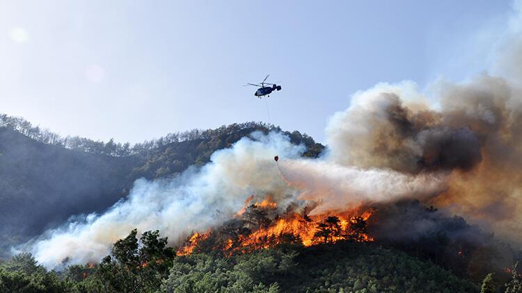 Antalya'da orman yangınında küle dönmüştü! 13 yılda yeşile büründü
