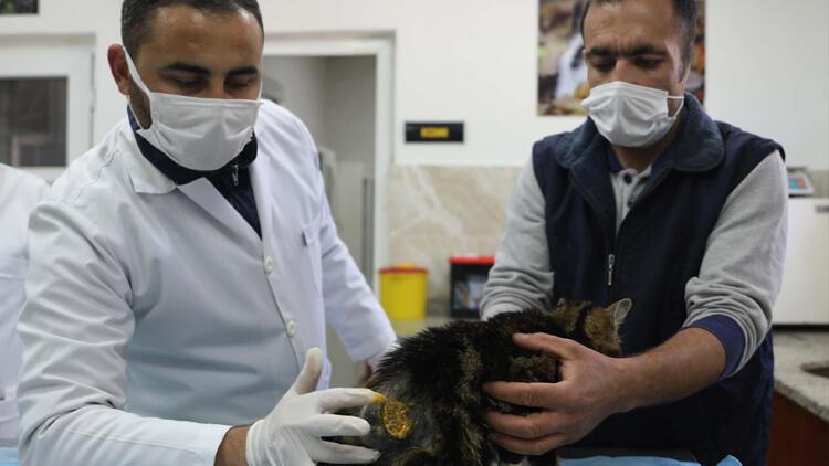 Çivili sopayla kediye dehşeti yaşatmıştı! Kendini böyle affettirdi