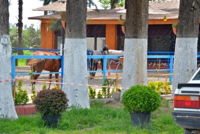 Hatay'daki kayıp atlarla ilgili yeni detaylar ortaya çıktı Bakamayınca 'kaçtı' ihbarı yapmışlar