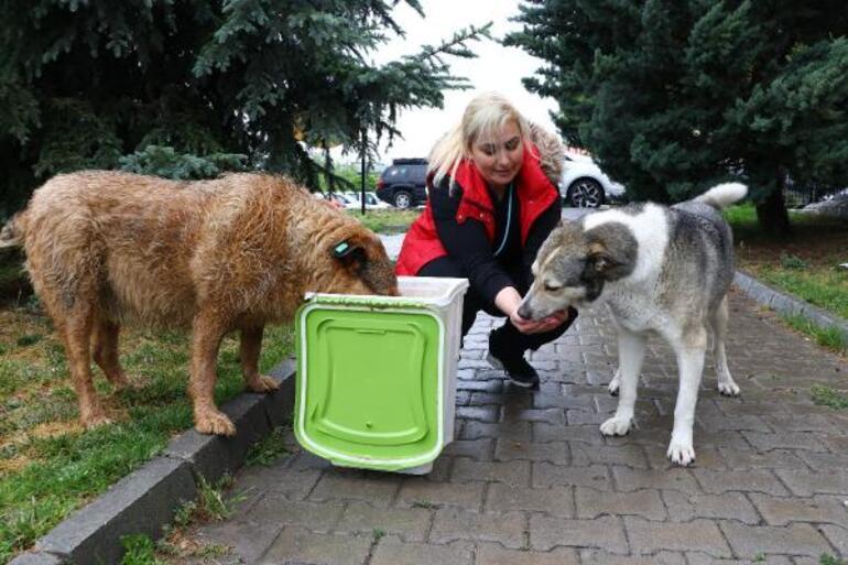 Köpeklere eziyet eden akademisyenin sözleri şok etti