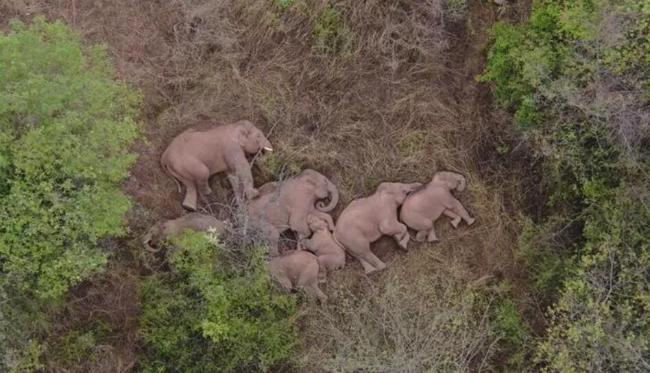 Gözünüzden kaçmış olabilir   Tüm ülke bu fillere kitlendi! Türkiye'den karavan hikayeleri... Sütte yeni tehlike: Çamaşır suyu…