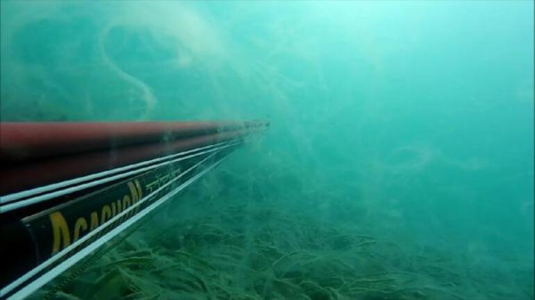 Deniz altında ürkütücü görüntü