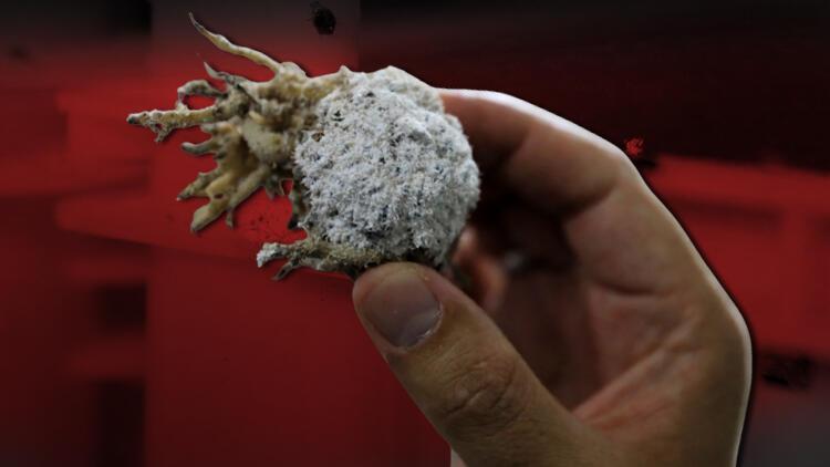Çiftçinin kâbusuna dikkat çeken önlem:  'Avcı böcek' üretiliyor.