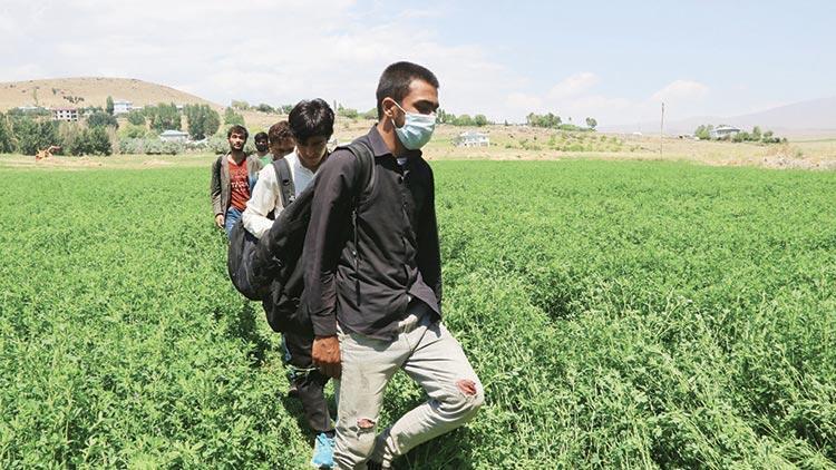 Afganlar her yerde