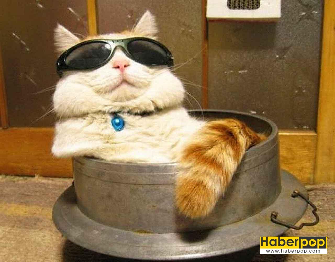 Komik Kedi Fotoları Kedi Hayvanları Blog