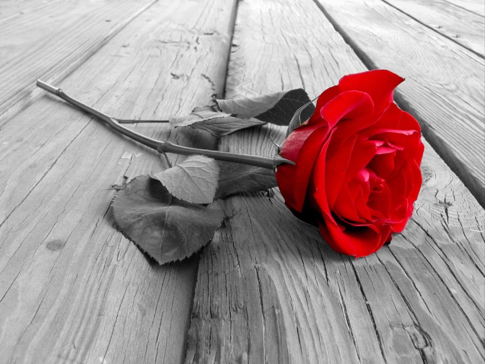 One Red Rose... (1/2)
