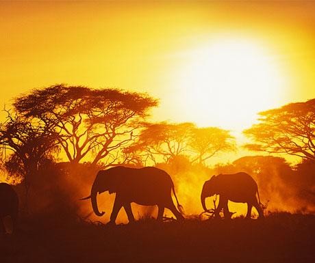 Quando ir: A melhor época para viajar pela África do Sul